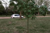 Vecino de la Ciudad y una anécdota sobre una planta que creció en su patio y trasladó al Parque Loinas