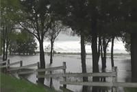 Con la última tormenta del día jueves de la semana pasada se cayeron 39 árboles