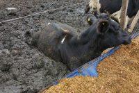 Tambos: En el mes de abril el precio de la leche fue de 3,40 el litro. Esta es una de las mayores crisis que atravesó el sector