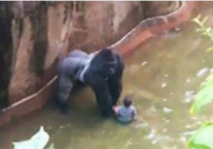 gorila.jpg_973718260