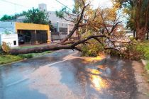 Temporal en Leones con caída de árboles y postes con 134 milímetros en tres horas