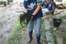 Hallazgo de una araña gigante en Catamarca