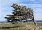 El viento del miércoles en Marcos Juárez llegó a los 93 km.
