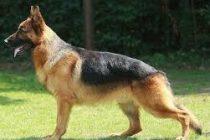 Niña de 3 años mordida por un perro en Inriville