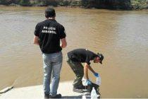 Primeros análisis e hipótesis sobre la aparición de peces muertos en Inriville