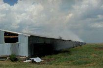 Galvez: Incendio de un criadero de pollos donde murieron 20 mil pollitos