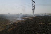 Incendio de un campo propiedad de Peiretti en General Roca