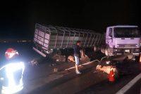 Vuelco de un camión cargado con animales en la autopista en Armstrong
