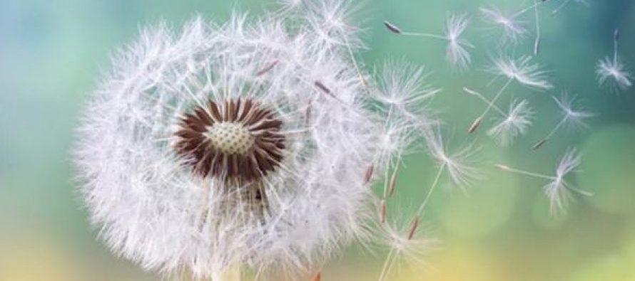 Primavera, temporada de alergias: cómo prevenirlas y minimizar sus efectos