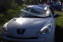 Vuelco de un automóvil en ruta 9 en General Roca luego que su conductora de Marcos Juàrez intentara esquivar un perro