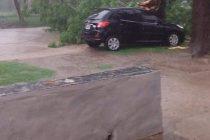 Caída de árboles sobre vehículos y cortes de energía prolongados, las consecuencias de la tormenta