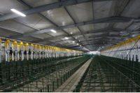 Importante granja porcina en Noetinger que alojarà 5.500 madres